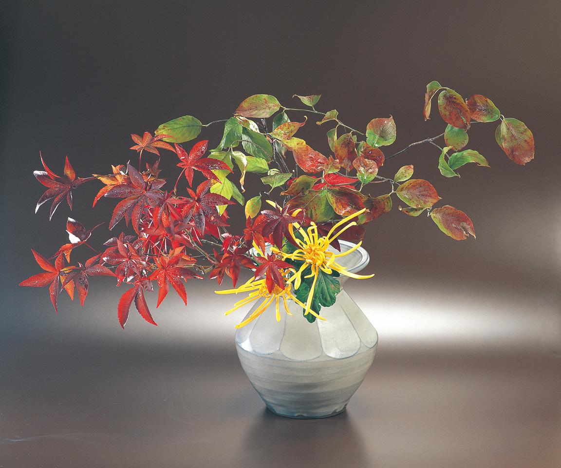 紅葉 花ミズキ 菊