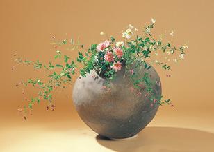 萩 菊 秋明菊